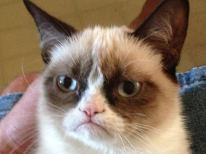 grumpy-cat-still-hates-everyone-at-south-by-southwest.jpg